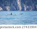 Orca 27433904