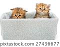 宠物 小 抠图 27436677