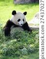 熊猫 大熊猫 舌头 27437027