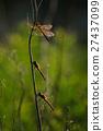 Fall dragonfly 27437099