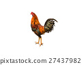 rooster, bird, fowl 27437982