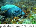 海 大海 海洋 27439633
