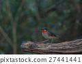 Beautiful of Siberian Rubythroat Bird 27441441