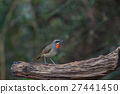 Beautiful of Siberian Rubythroat Bird 27441450