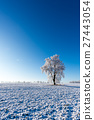 One frozen tree in the middle of field  27443054