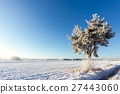 Single frozen pine next to meadow covered by snow 27443060
