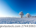 Two frozen trees in the middle of field  27443063