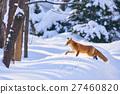 ezo red fox, fox, winter 27460820