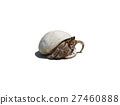 Hermit crab ensconce on white background 27460888
