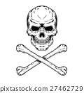 skull skeleton bone 27462729