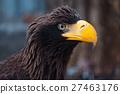 Portrait of a black eagle 27463176