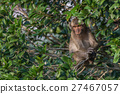 Monkey in nature 27467057