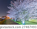 Cherry Blossoms at night 27467493