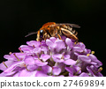 Bee collect pollen on pink flower 27469894