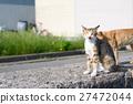 고양이, 후쿠오카 현, 관광지 27472044