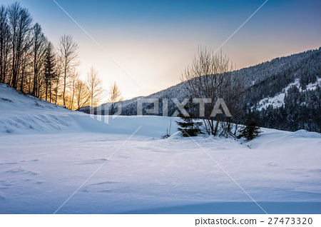 trees on snowy meadow in mountains 27473320