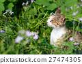 猫 猫咪 小猫 27474305