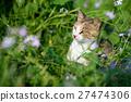 แมวน่ารักของ Aikojima cetacea แมวขาว 27474306