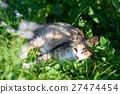 猫 猫咪 小猫 27474454
