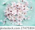 Cherry Blossom 27475804