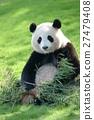 熊猫 吃 饮食 27479408