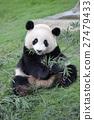 熊猫 吃 饮食 27479433