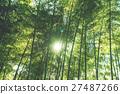 죽림, 대나무 숲, 숲 27487266