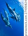 小笠原的海豚 27490824