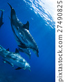海豚 海底的 海裡 27490825
