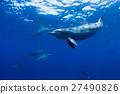 海豚 海底的 海裡 27490826