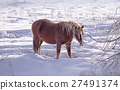 One brown Horse stay in the snowy woods in winter 27491374