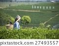 herbal tea 27493557