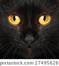 Black cat eyes macro animal background 27495626