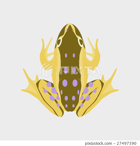 Vector illustration in flat style toad 27497390