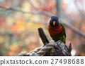 cockatoo, macaw, parakeet 27498688