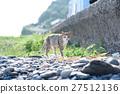 แมวน่ารักใน Aoshima White gobby หญ้าแมวขาวบนท่าเรือ 27512136
