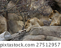 panthera leo, bone, bones 27512957