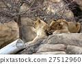 Lion 27512960