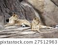 Lion 27512963
