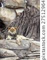 Lion 27512964