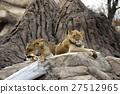 Lion 27512965