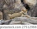 Lion 27512966