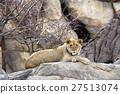 Lion 27513074