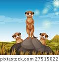 Three meerkats standing on the rock 27515022