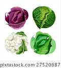 Set of vector watercolor vegetables 2 27520687