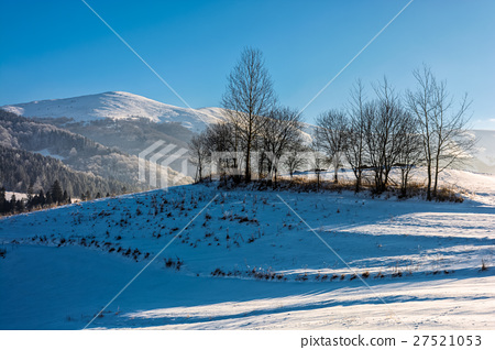 trees on snowy meadow in mountains 27521053