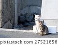 cat, pussy, a cat 27521656