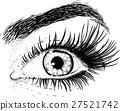eye, eyelash, vector 27521742