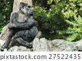 大猩猩 動物 哺乳動物 27522435