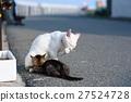 แมวของไอโกะและผู้ปกครองและเด็ก 27524728